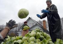 Еда в Москве дорожает пугающими темпами, лидирует капуста
