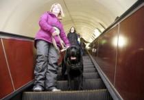 Собак ради слабовидящих учат пользоваться московским метрополитеном
