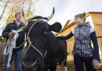 Не в щенках счастье: семикласснице из глубинки тульские власти подарили корову