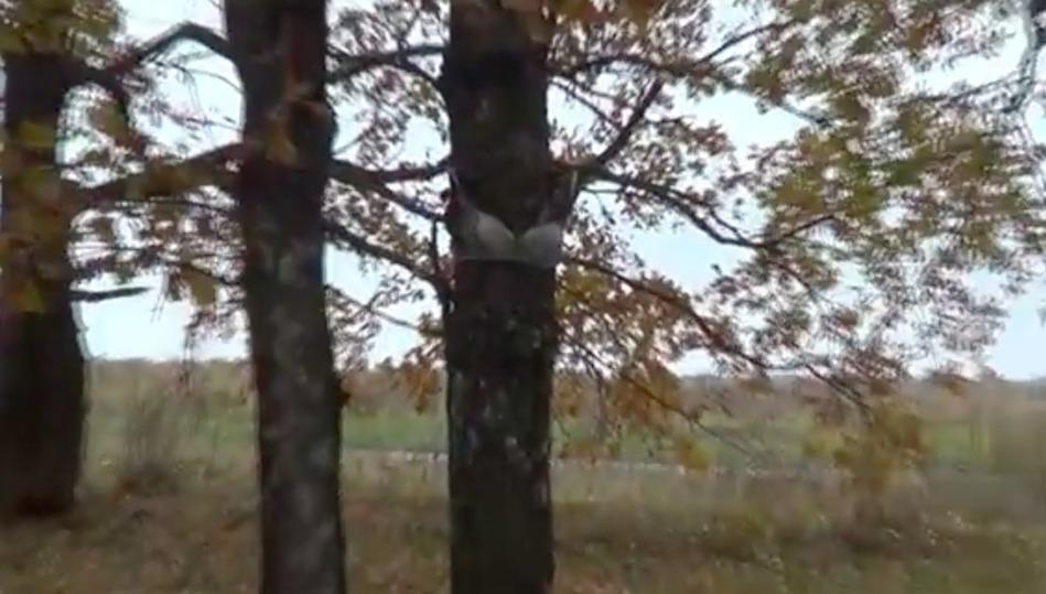 Туляк заснял навидео «логово маньяка» слифчиками надеревьях